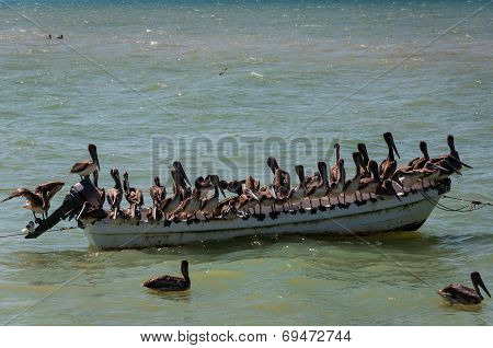 Pelicans On An Old Boat