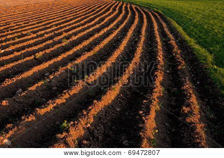 Plowed Rows In A Farming Field