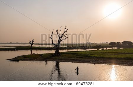 Fisherman And Tree, Amarapura, Myanmar