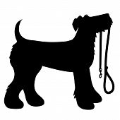 A cartoon black silhouette of an Airedale Terrier with a leash in its mouth poster