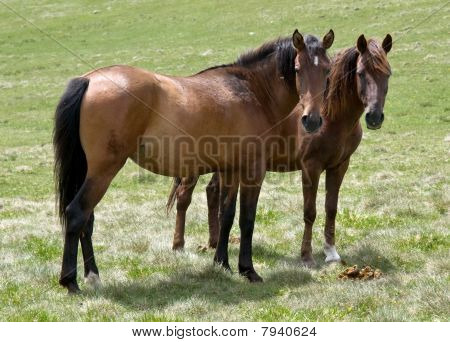 Wild Horses In Highlands