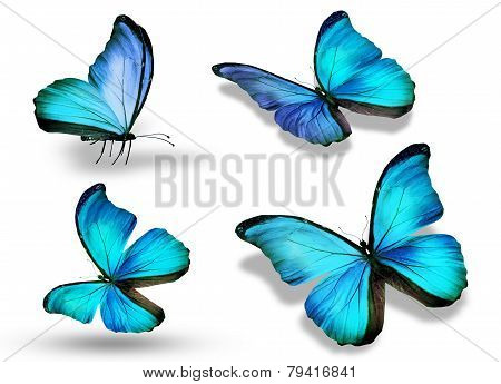 Four Blue Butterflies, Isolated On White Background