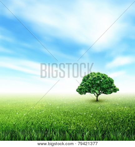 Summer, Field, Sky, Tree, Grass, Flowers