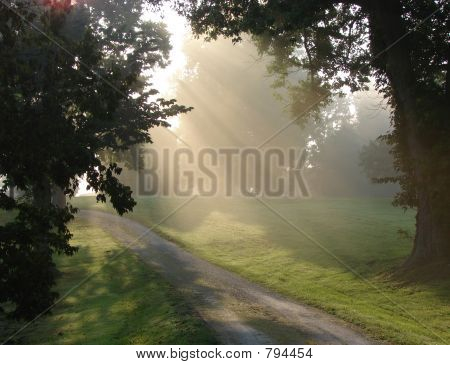 Country Road in Soft Misty Sunlight