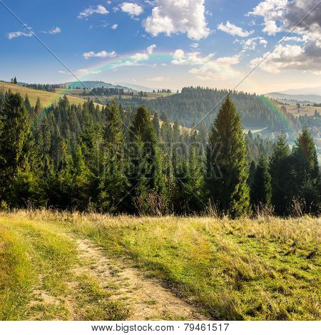 Coniferous Forest On A  Mountain Top At Sunrise