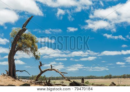 Sheoak On The Hill
