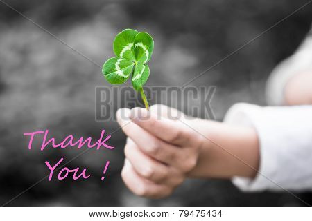 Four-Leaved Clover in a Child Hand - Thank You