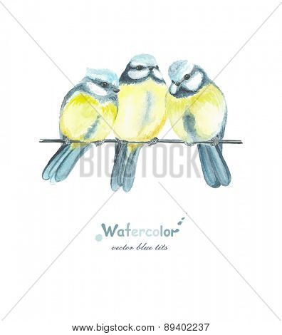 Three watercolor blue tits, vector illustration in vintage style.