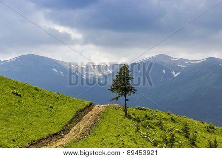 Carpathian Landscape With A Lone Tree