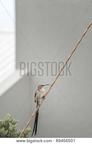 Sugarbird At Holiday Home