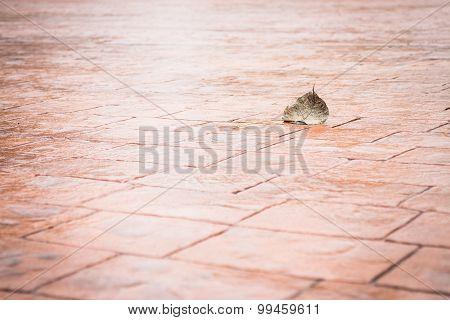 Bodhi Or Pho Leaf Dry On Brick Floor