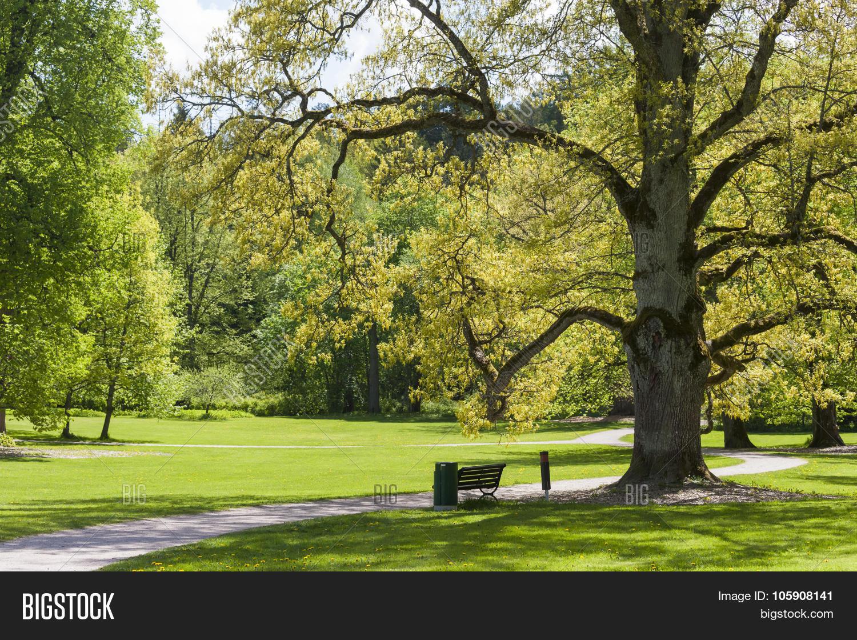 Old Oak Tree Image Photo Free Trial