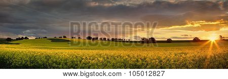 Canola Farmlands As The Sun Sets