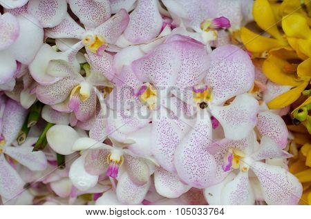 Beautiful Yellow Orchid Background