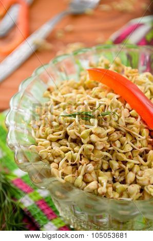 Green raw buckwheat sprouts in a bowl