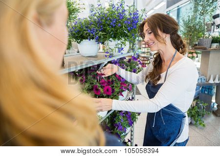 Mid adult salesgirl showing fresh flower plant to female customer in shop