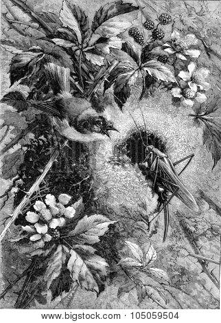 The Intruder, vintage engraved illustration. Magasin Pittoresque 1882.