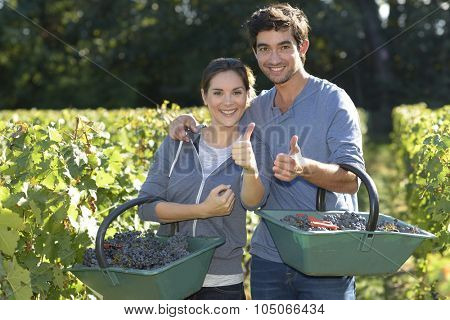 Young couple of wine-growers showing thumbs up