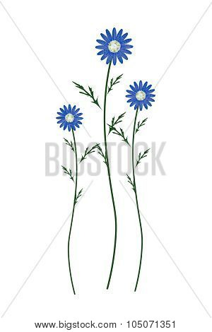 Blue Daisy Blossoms On A White Background