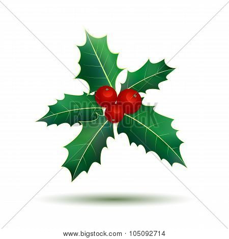 Holly leaves. Christmas holly berries.