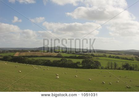 Rural Landscape With Sheep