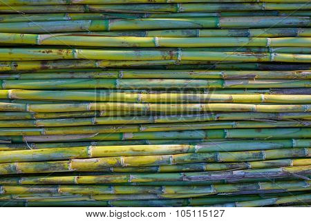 River green cane harvest texture pattern background in Valencia Parc de Turia of Spain