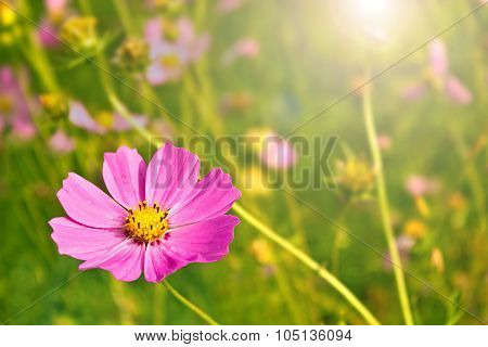 Flower with blurry background and sunburst