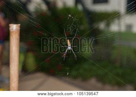 Large spider in the garden