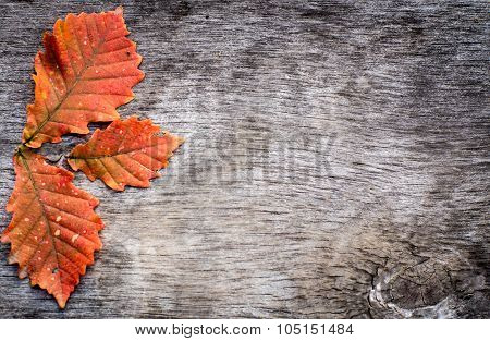 orange oak leaves , on wooden background
