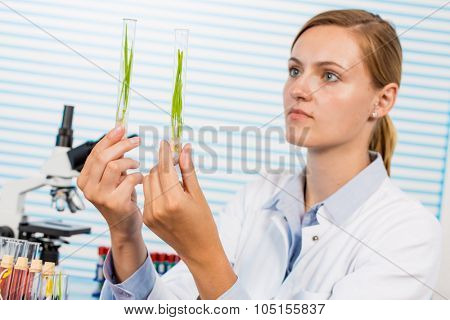 Research of GMO plants in microbiological laboratory