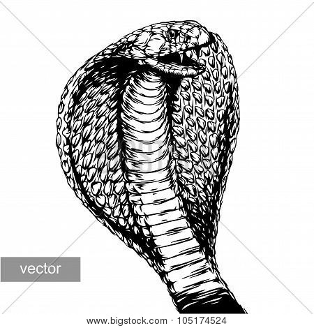 engrave isolated cobra attack vector illustration sketch. linear art poster