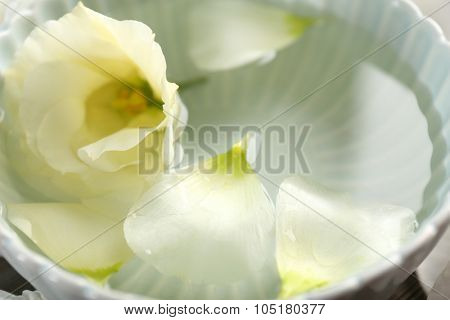 Rose petals in bowl with water closeup