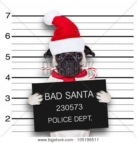 Mugshot Santa Dog
