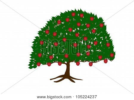 Apple Tree With Apples On White