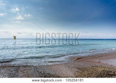 Plantations Of Seaweed On Beach, Algae At Low Tide