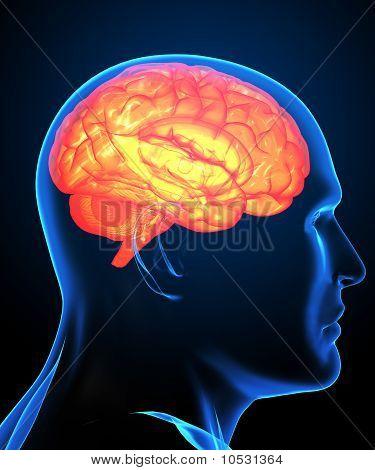 Menschliche Gehirn Röntgenbild