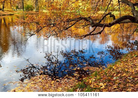 Beautiful colors of autumn landscape by the lake