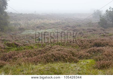 Amrum (germany) - Heathland At Fog