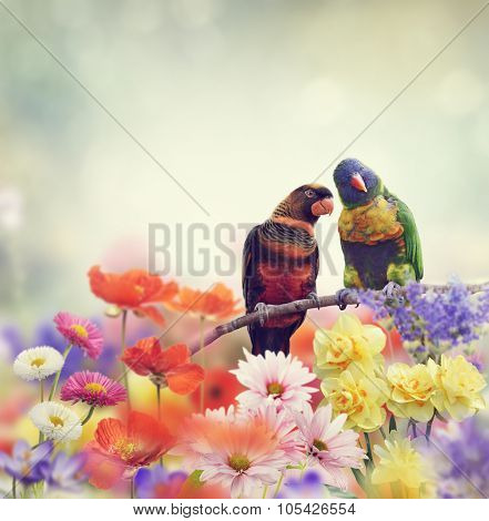 Rainbow Parrots Perch in Flower Garden