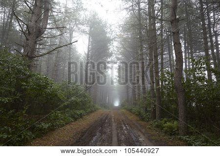 Amrum (germany) - Forest Path At Fog