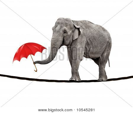 Tightrope Walking Elephant