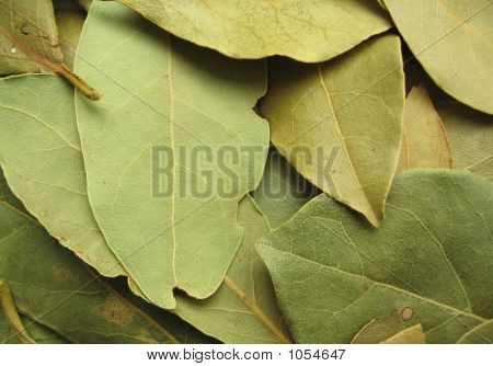 close-up of abstract background made of bay leaves poster