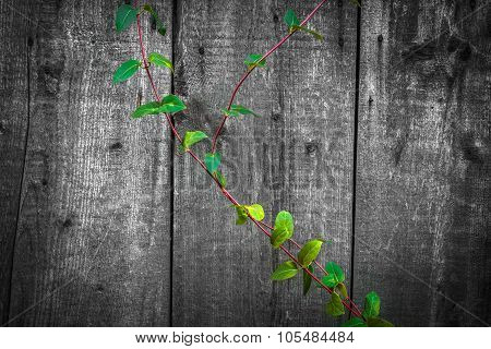 Hi Quality Wooden Texture Used As Background with green leaf