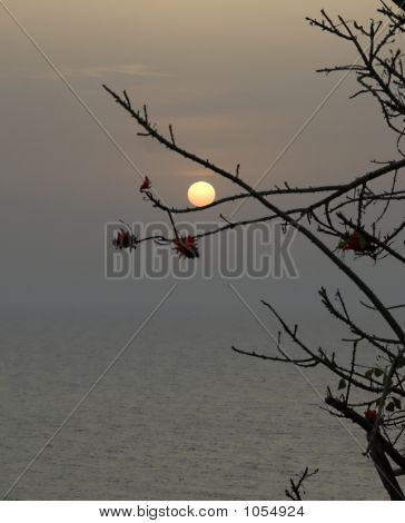 the sun on the branch of tree sunrise. poster
