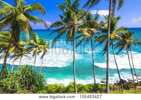 wild beautiful beaches of Sri Lanka
