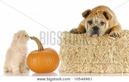 Halloween Puppy And Kitten