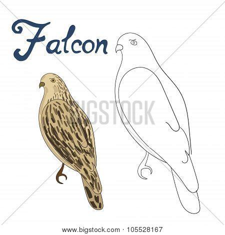 Educational game coloring book falcon bird