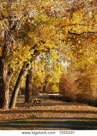 Fall Serenity Path