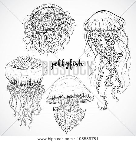 Collection of jellyfish. Vintage set of black and white hand drawn marine fauna. Isolated vector ill