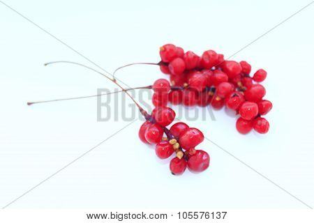 Branch Of Red Ripe Schisandra Isolated